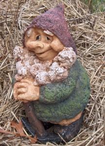 Minor Gnome 49'r
